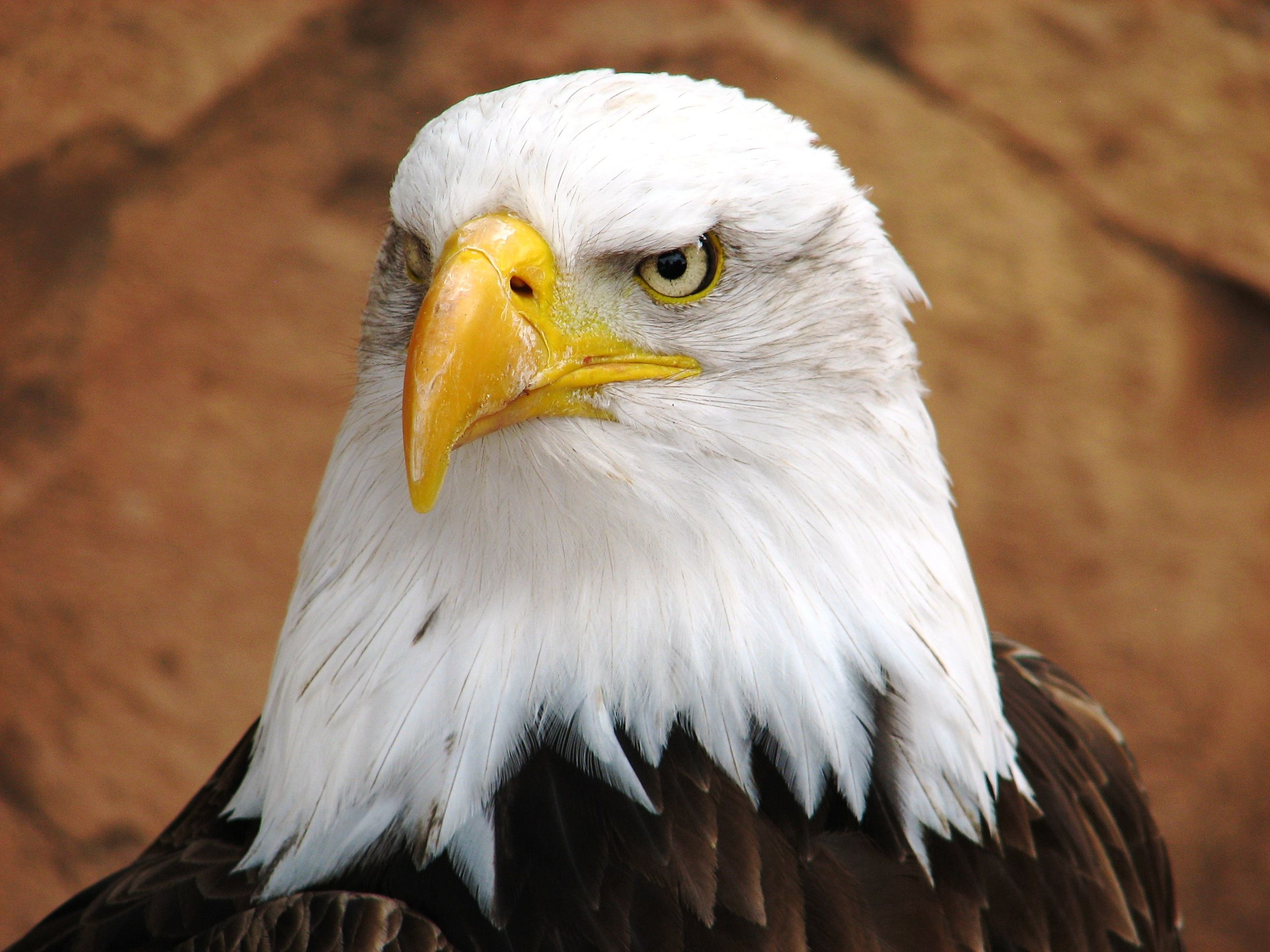Free Eagles and Vultures Pictures